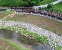 Streambank Stabilization Contract B